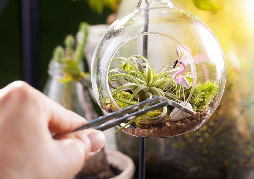 Team building création de terrarium 4