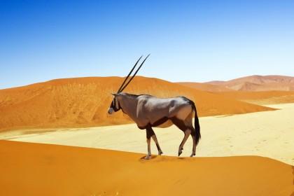Agence événementielle toulouse namibie
