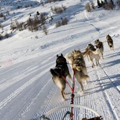 Incentive groupe Andorre traineau
