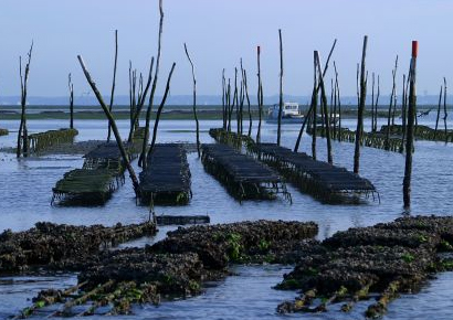 Incentive Bassin d Arcachon