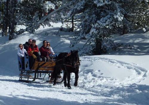 Journée neige entreprise balade traineau à cheval