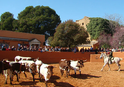 Journée Taurine en Pays Basque Espagnol