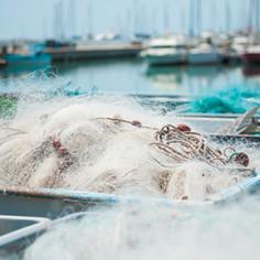 Journee catamaran Palavas les Flots