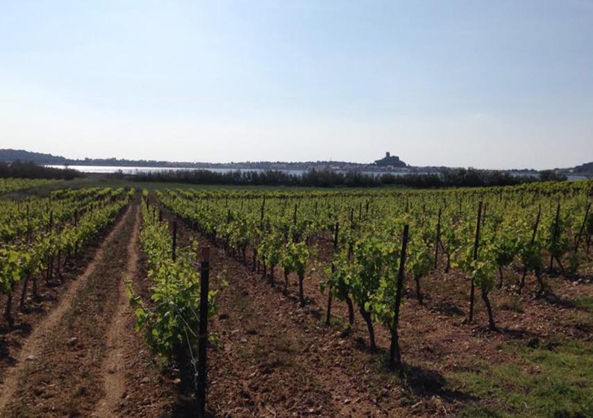 Journée détente méditerranée vignes