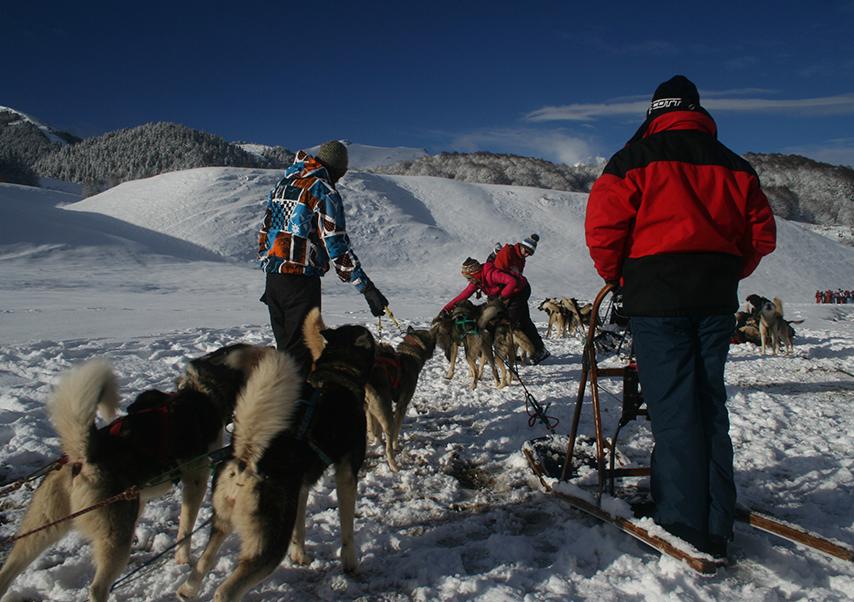 Séminaire dans les Pyrénées chien de traineau
