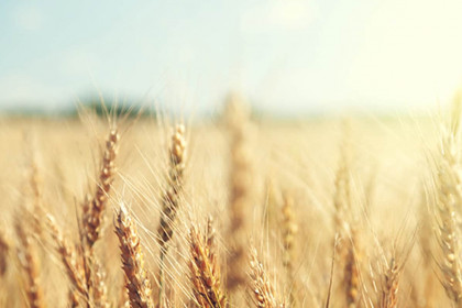 Team building agriculture blé