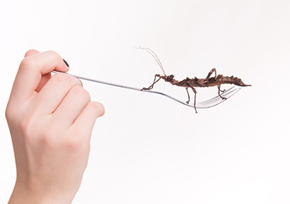 Team building challenge insecte