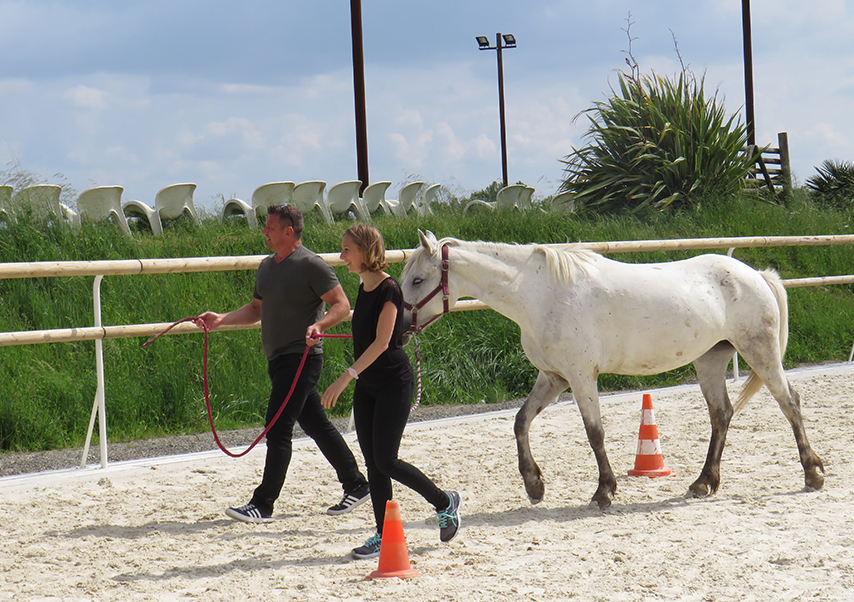 Team building equitation entreprise