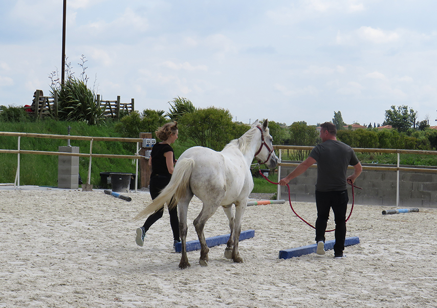 Team building equitation toulouse