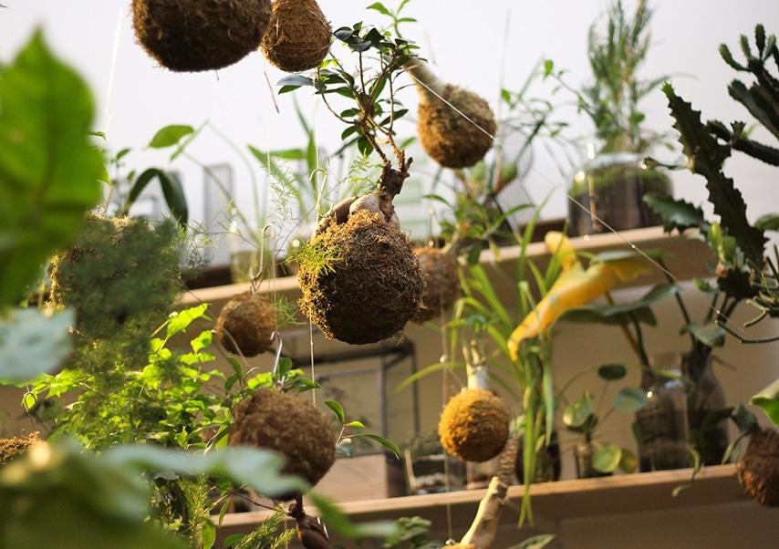 Team building vegetal kokedama 2