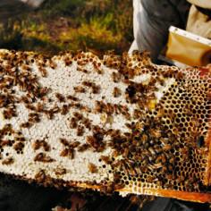 Visite d'une miellerie dans le Gers avec dégustation