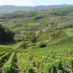 Visite-des-vignobles-saint-emilion