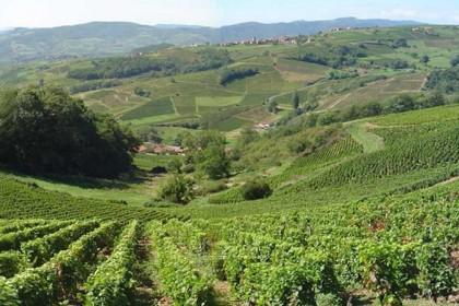 Visite des vignobles saint emilion