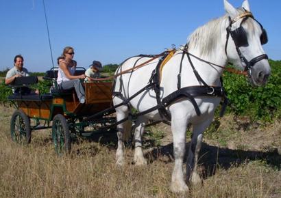 Visite des vignobles a Gaillac