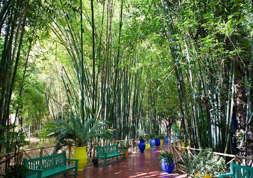 Voyage entreprise Marrakech jardin majorelle