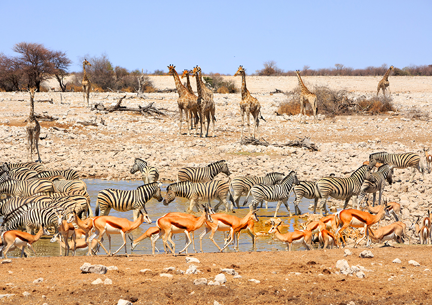 Voyage entreprise Namibie safari