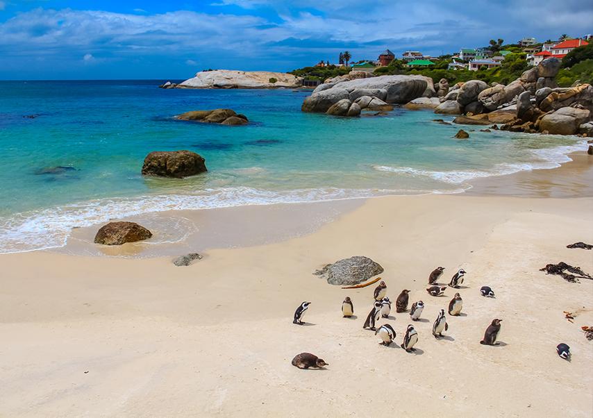 Voyage entreprise afrique du sud manchot
