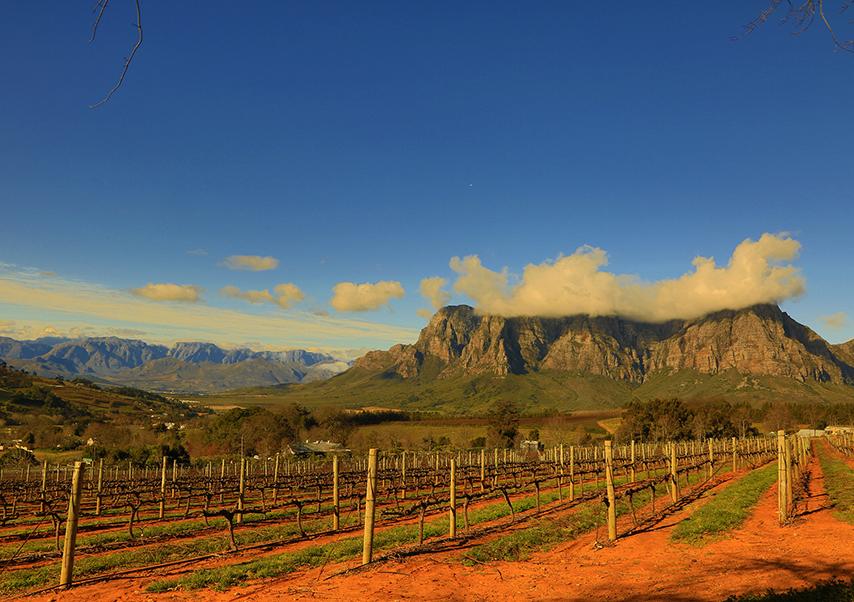 Voyage entreprise afrique du sud vignes