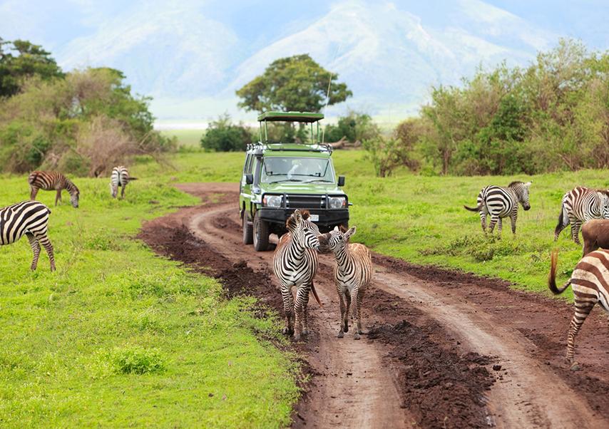 Voyage entreprise afrique du sud zèbres