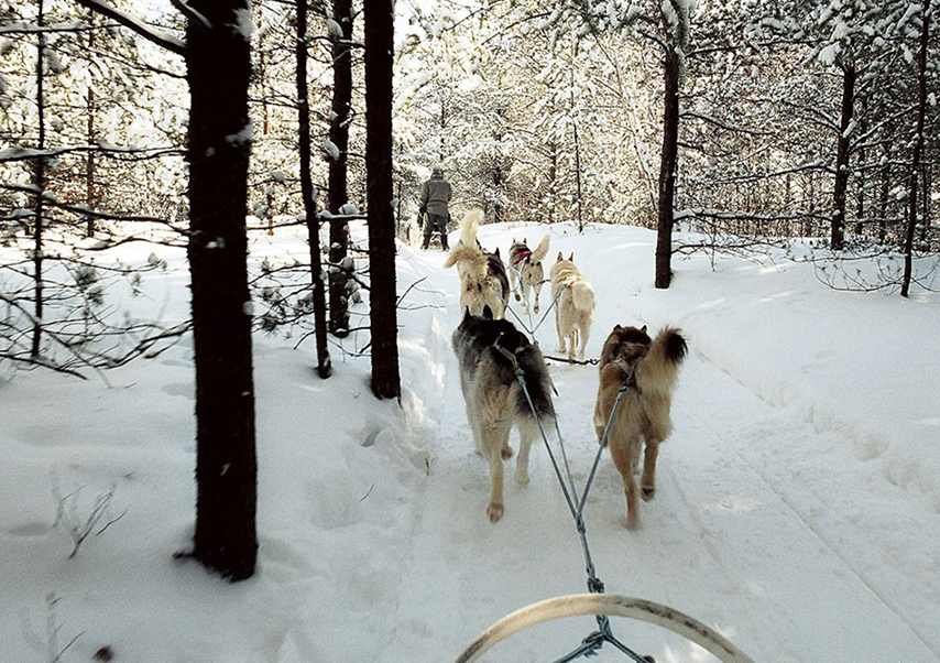 Voyage incentive Canada chien de traineau
