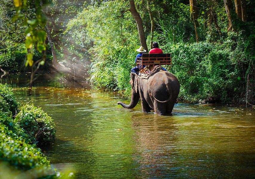 Voyage incentive Thaïlande elephant