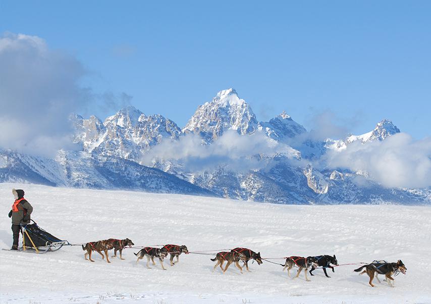 activités neige originales chiens