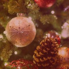 agence evenementielle toulouse Arbre de Noel