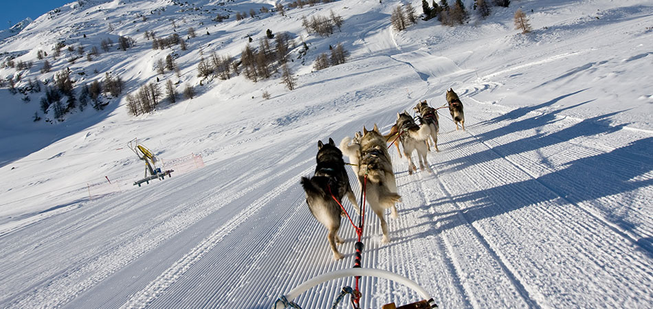 multi activities day andorra sled dog