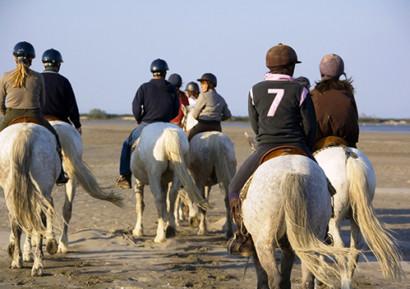séminaire en camargue cheval