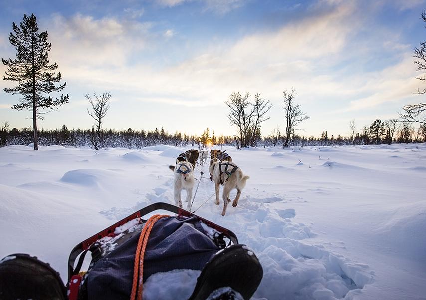 séminaire montagne espagne chiens