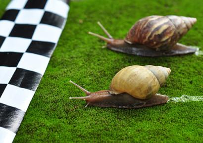 team building émission télé course escargots