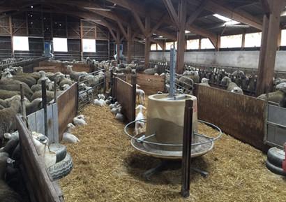 visite élevage de brebis toulouse
