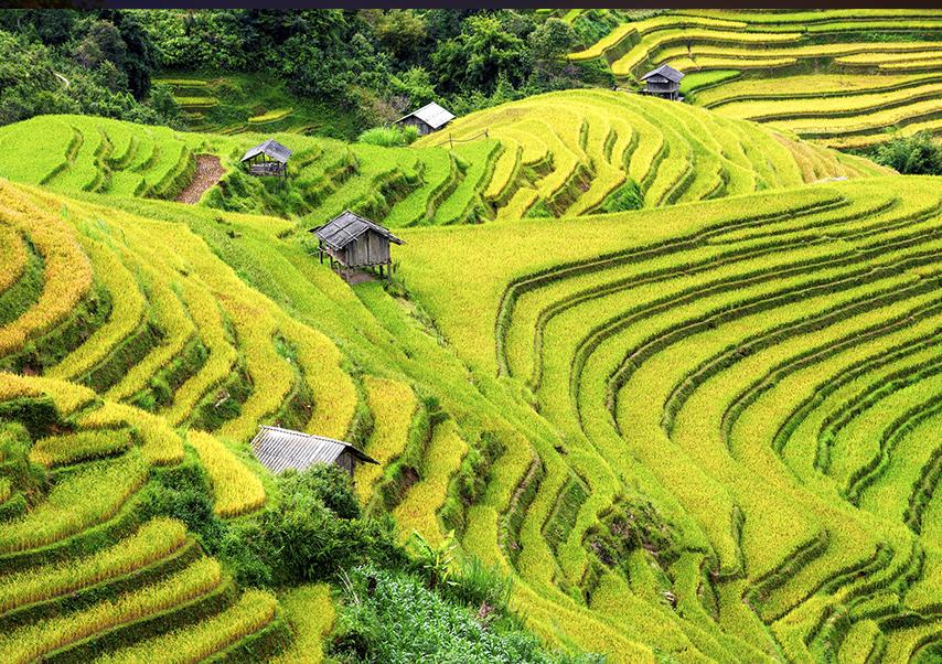 voyage entreprise bali rizière