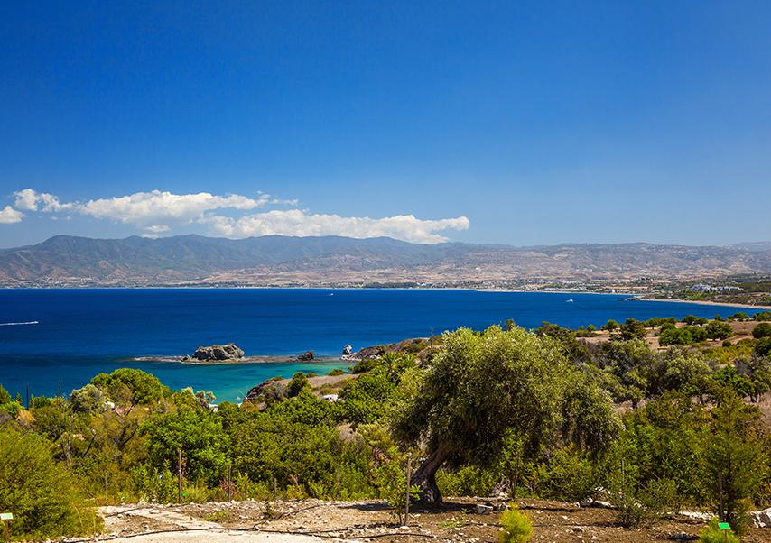voyage entreprise chypre foret