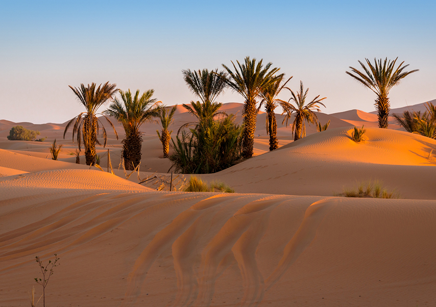 voyage entreprise desert maroc palmeraie